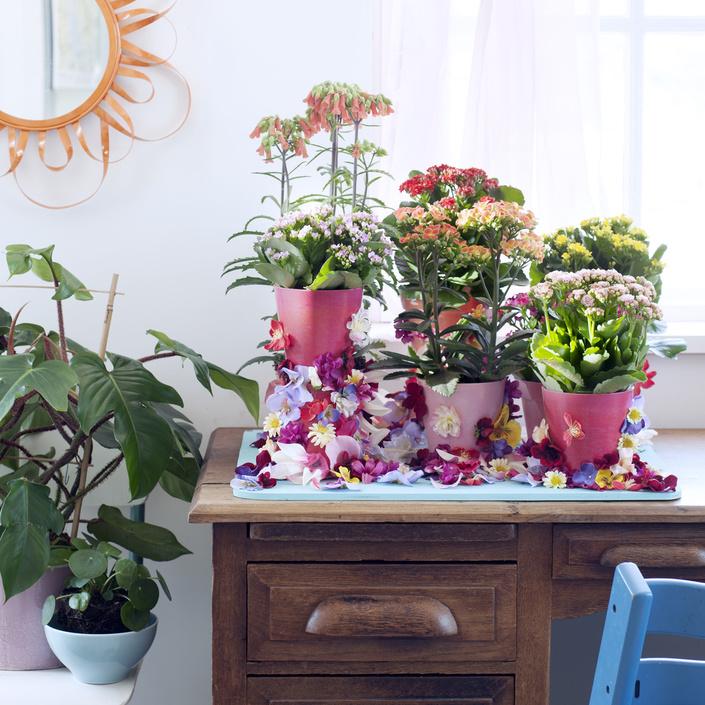 Kalanchoe Es La Planta De Interior Del Mes Julio Garden Amoros